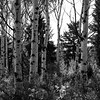WyomingLandscapes (28 of 9)