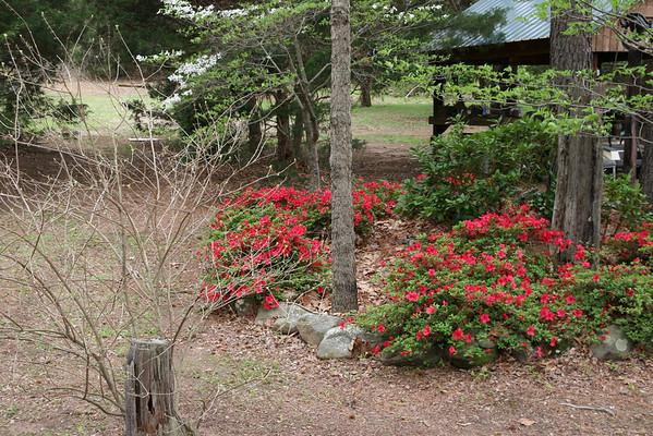 Yard April 2009