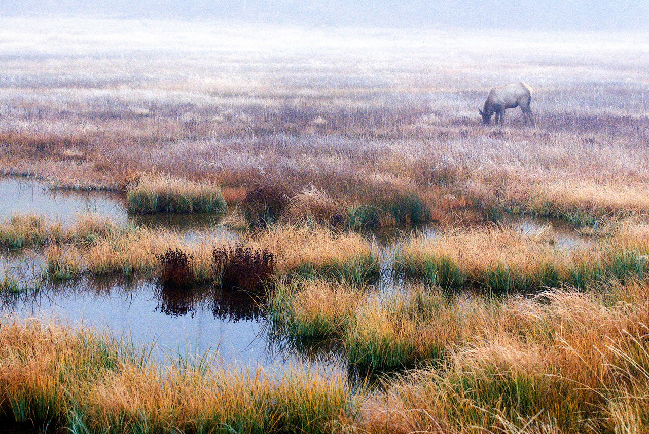 Elk Pond<br /> Yellowstone National Park