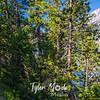 140  G Jenny Lake AM and Trail