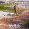 644  G Elk in Thermal Area
