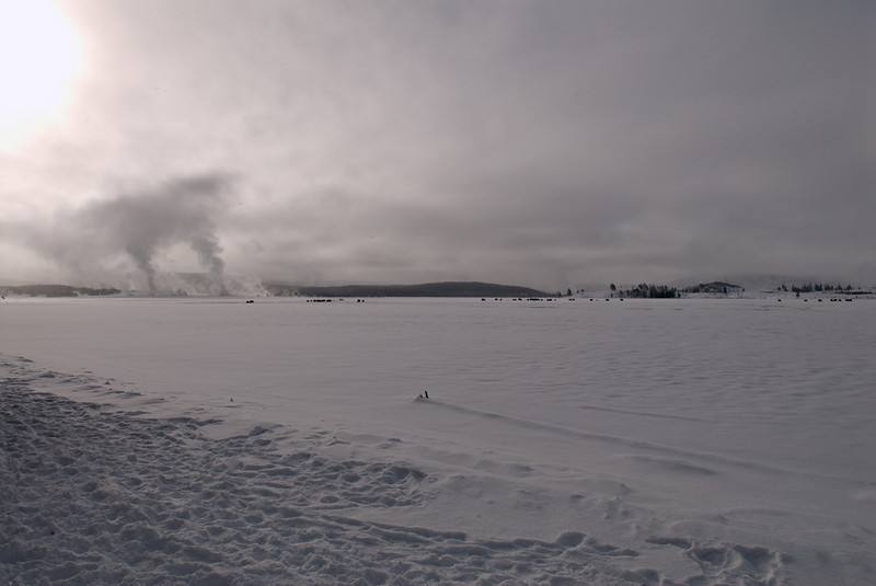 This was taken a couple of miles from Old Faithful.  Those are geysers in the background with bison in the foreground but at a distance.  I liked this shot because it was so stark and cold looking.