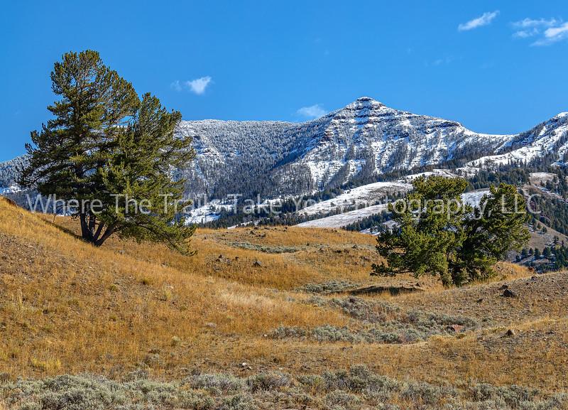 Lamar Valley Landscape