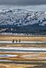 Hayden Valley Landscape VERT
