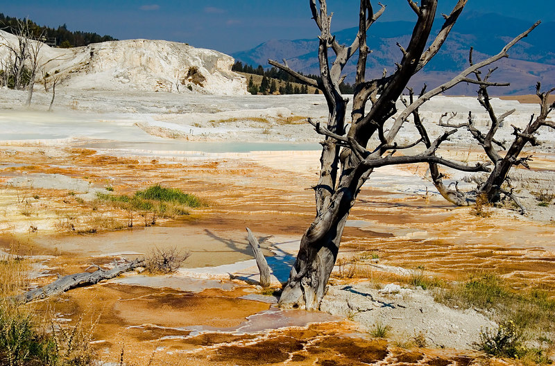 "<i><h2>""Main Terrace""</i></h2><h4>Mammoth Hot Springs</h4>"