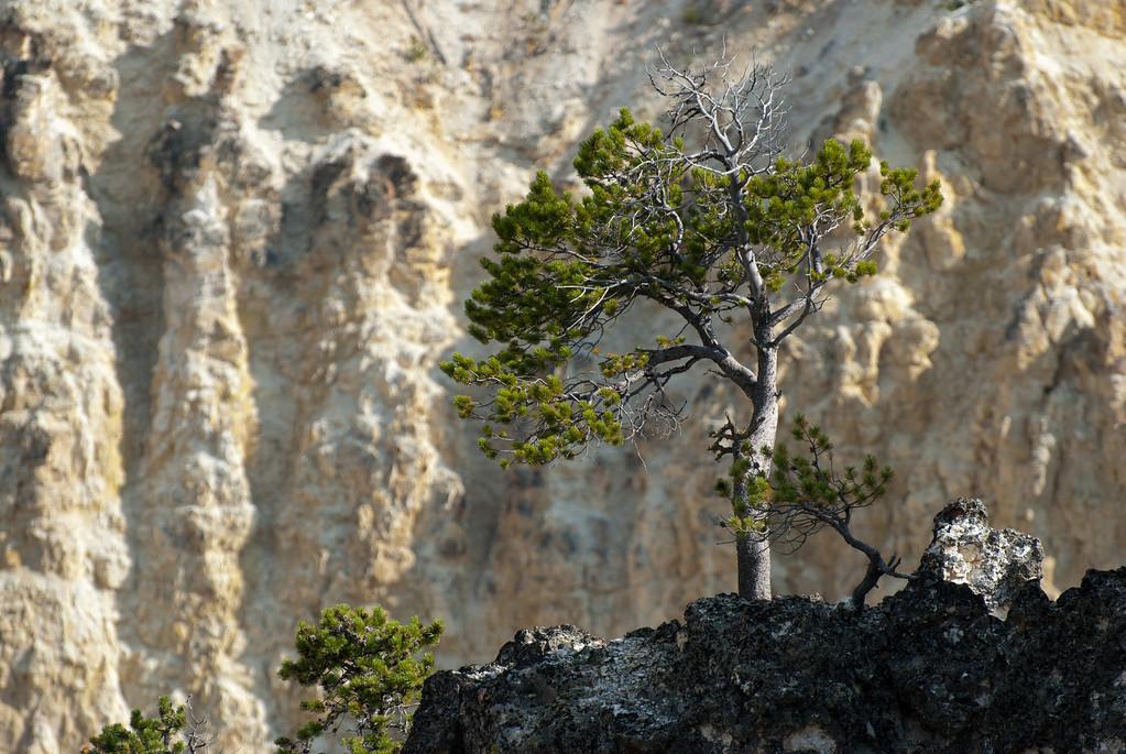 Yellowstone, canyon