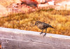 53. Little Birdy