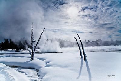 Yellowstone_Snow_Trees