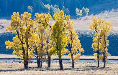 Lamar Valley, Yellowstone National Park, Wyoming.