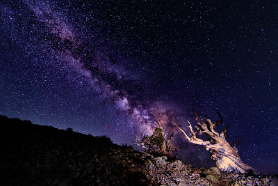 Milky Way over 2 Bristlecones