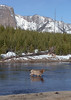 elk_across_river
