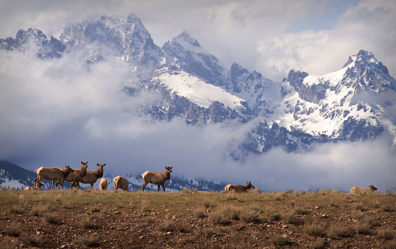 elk_and_mountains