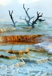 Dawn at Canary Springs, Mammoth Hot Springs area. The colors come from different types of bacterial that live in different temperature waters. The white areas are now dry, and so have no bacterial mats.