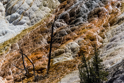 Yellowstone National Park.  Mammoth hot springs.