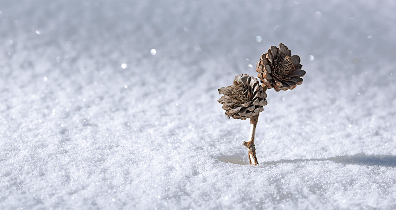 branch_in_snow