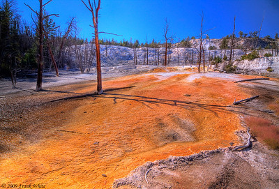 Colored runoff from Angel Terrace springs, at Mammoth Hot Springs.