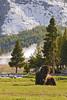 Bison-2-Yellowstone-06-2011