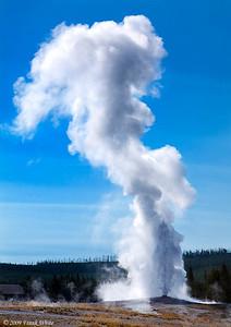Old Faithful eruption back lit. The steam rises 150+ feet.