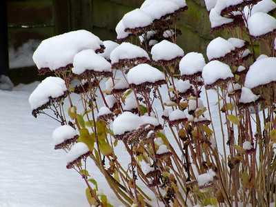 Yeovil Snow Day