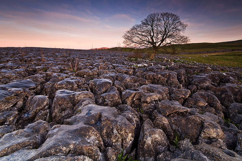 Lone tree and limestone pavement on top of Conistone Dip.