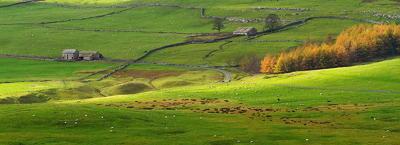 Autumn colour in the Yorkshire Dales.