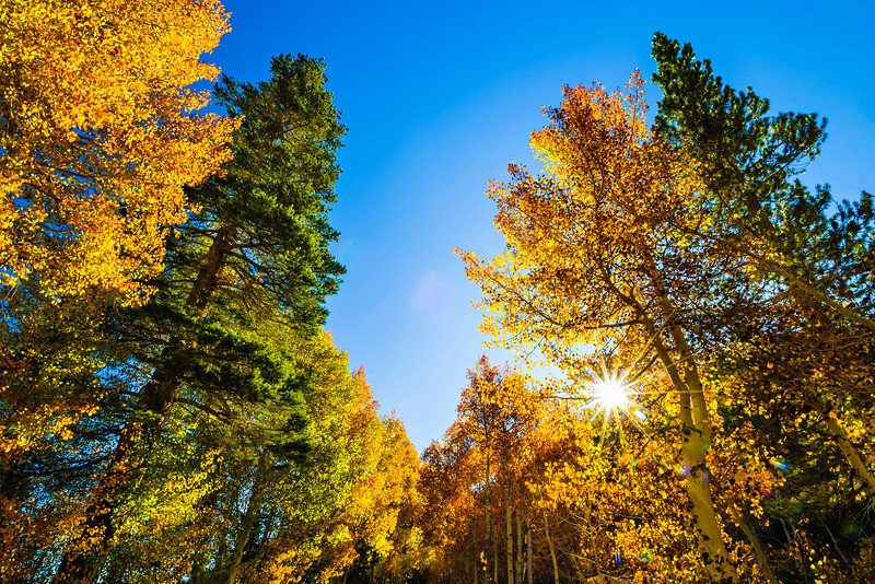 Fall-Colors-in_Eastern_Sierra-Inyo-National_Forest-Yosemite-National-Park-DSC_0752-CALENDAR 2013
