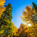 Fall-Colors-in_Eastern_Sierra-Inyo-National_Forest-Yosemite-National-Park-DSC_0752-CALENDAR 2013