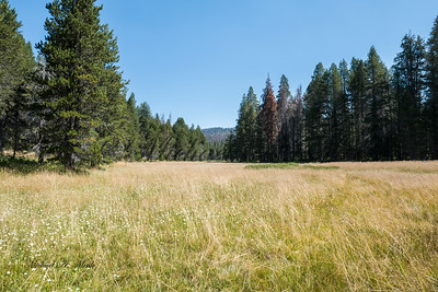 Near McGurk Meadow