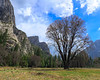 Yosemite Valley (1 of 5)