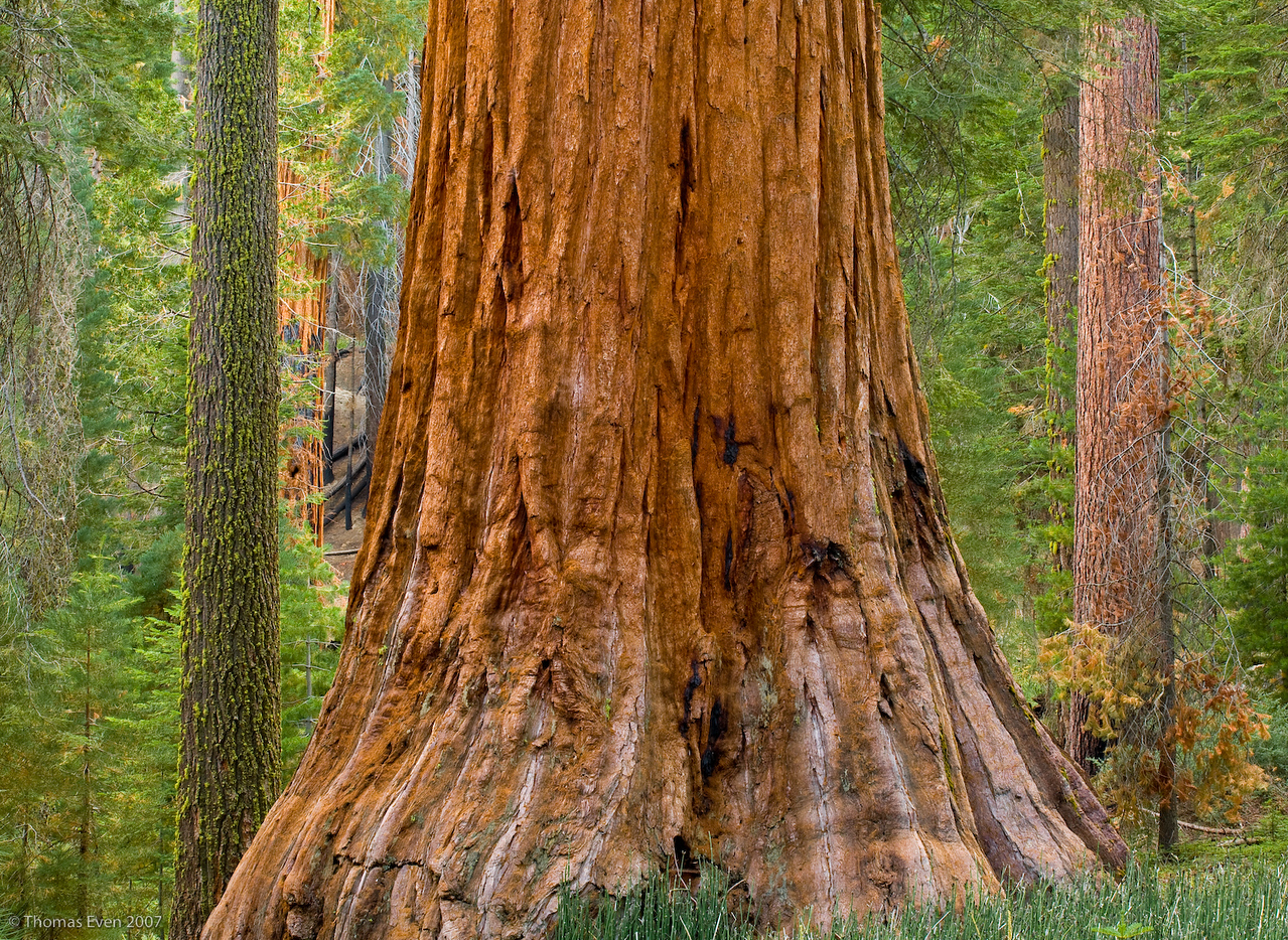 Yosemite_20070827_7426