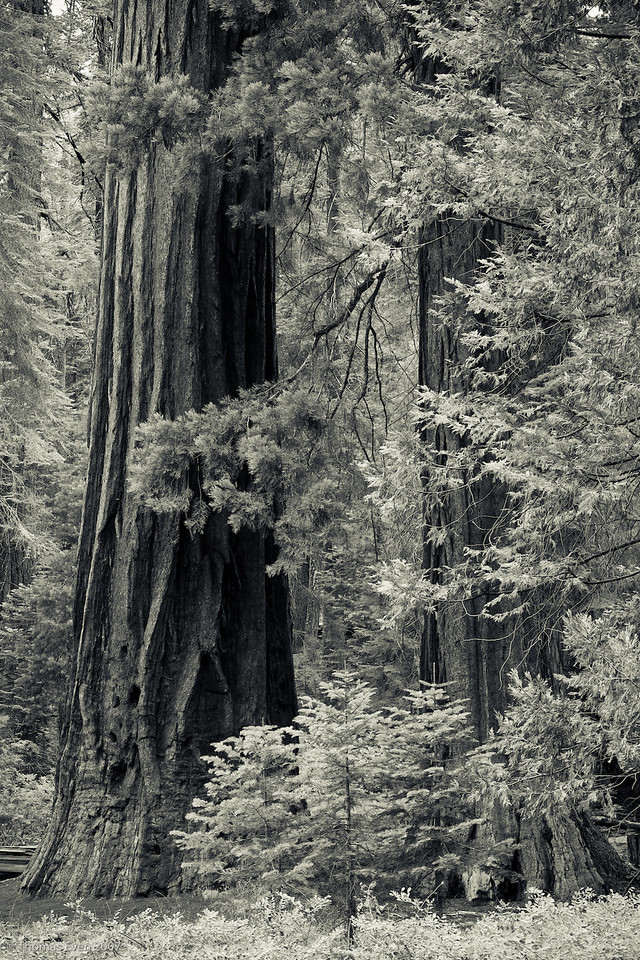 Yosemite_20070827_7411