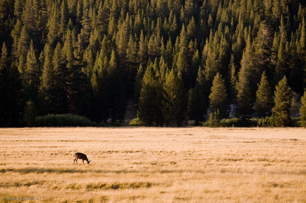 Yosemite_20070825_6836