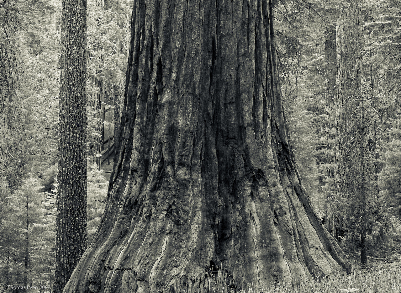 Yosemite_20070827_7426-2