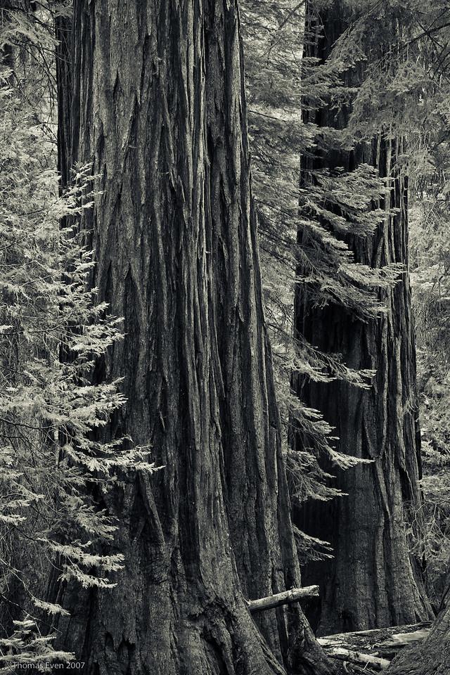 Yosemite_20070827_7407