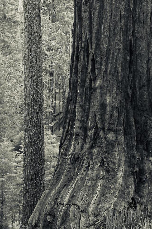 Yosemite_20070827_7425-2