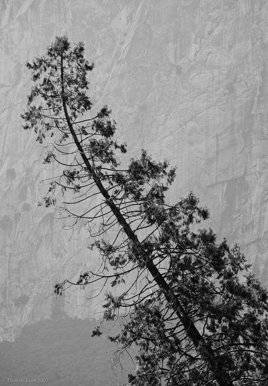 Yosemite_20070826_7187