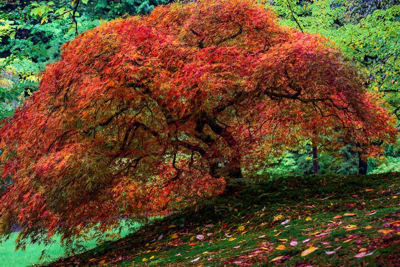 """""""Autumn Splendor"""""""