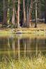 Yosemite_DSC0009018 016