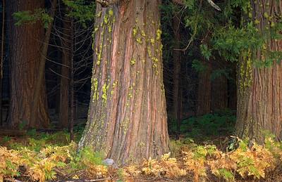 Yosemite_DSC0117 11x17001 018