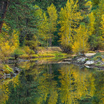 """""""Merced River in Fall"""" Yosemite National Park.  Hopefully a sign of how things should look this fall! This image is from November a few years ago. Just love fall colors and reflections! Feel free to share and let me know if you like it.  Walking along the Merced River in Yosemite National Park in the fall is just an amazing place to be!  Add that to your list of things to do in Yosemite!  Nikon D800, Nikon 70-200mm f/2.8 @ 140mm. ISO 100, f/6.3 and .3 seconds exposure - with a tripod of course!!"""