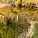 "Fall Tree Reflections.  My facebook Fan Page is here: <a href=""http://www.facebook.com/pages/Yosemite-and-Bay-Area-Nature-Photography-by-John-Harrison/190152125697?ref=nf"">http://www.facebook.com/pages/Yosemite-and-Bay-Area-Nature-Photography-by-John-Harrison/190152125697?ref=nf</a>"