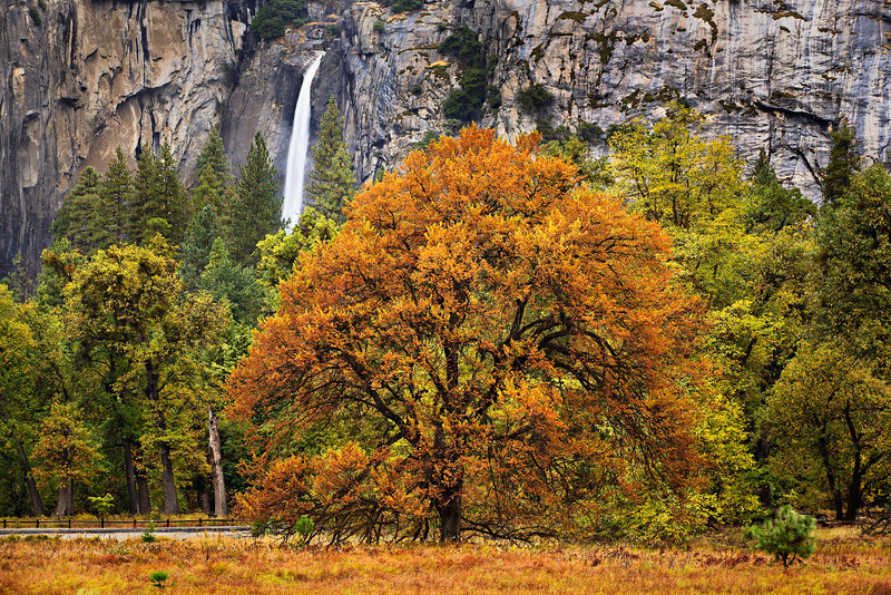 """Yosemite Falls and Fall Colors in Yosemite""  With the lower Yosemite Falls flowing and the trees with bright Orange, Yellow and Greens, Yosemite is a fantastic place to be for fall colors!"