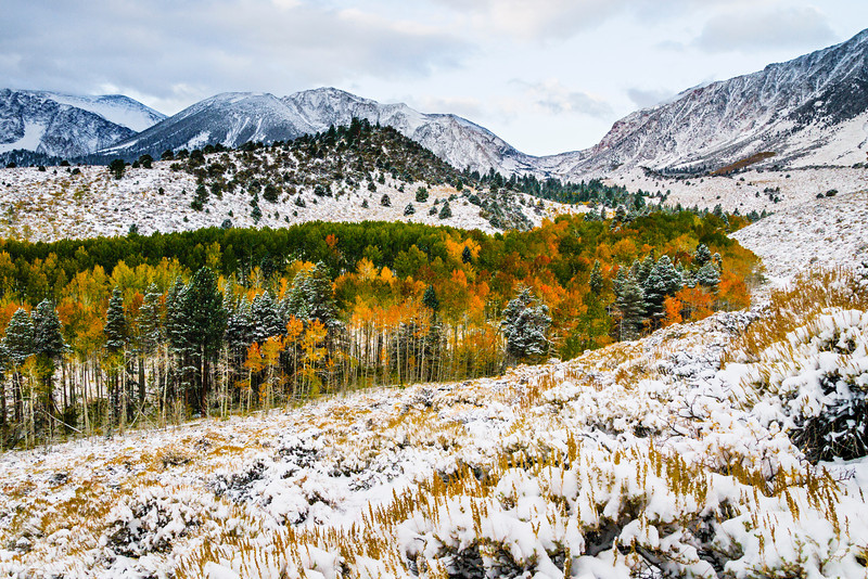 """""""Snow and Fall Colors in the Eastern Sierra""""  I captured this image a few years ago just after a first snowfall with the fall colors. It started out around 90 degrees and quickly changed within a few days to get this crisp snowfall.  This is located in Inyo National Forest in the Eastern Sierras outside Lee Vining.  This image spoke to me as I saw the curves along the colorful treeline and the layers of hills and mountains in the background.   The light dusting of snow offsets the colorful fall colors in the Aspens and pines. Don't forget to eat at the Whoa Nellie Deli for some of the most amazing food after a day of shooting!"""