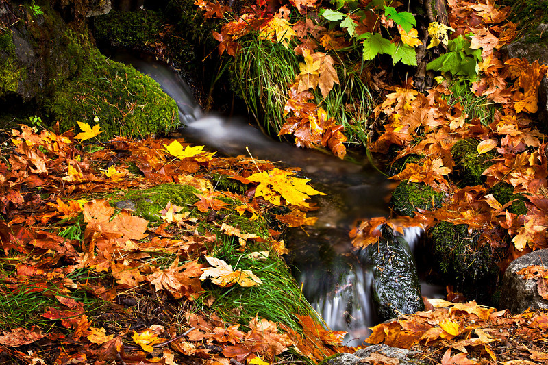 """Below Fern Springs in Fall"""" Fall in Yosemite is really beautiful and should be coming soon. Even if the park isn't open I thought it was time to dig out some fall images to share! The best thing I love about Yosemite is how few people there are. The air is starting to get cooler and nights brisk. Leaves start to change colors and fall. Walking through the meadows or along a trail and being one of a few people there is so peaceful and tranquil - enjoying Yosemite how it is to be enjoyed! Where do you like to go in the Fall?!<br /> — at Yosemite National Park."""