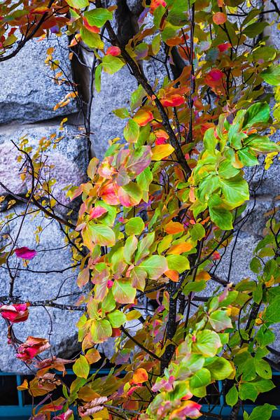 """Fall Colors at the Ahwahnee""  Yosemite National Park, California."