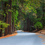 """Fall Walk in Yosemite National Park""  The best part about visiting Yosemite National Park in the Fall is the lack of people!   This is the road to Mirror Lake near the bus stop in the morning and not a single person around!  Nothing better than Yosemite in the Fall and no one around!"