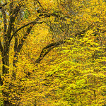 """Tranquil Fall Leaves and Branches in Yosemite National Park"