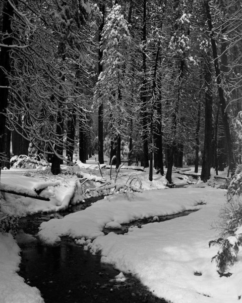 Meadow near Yosemite Village February, 2011