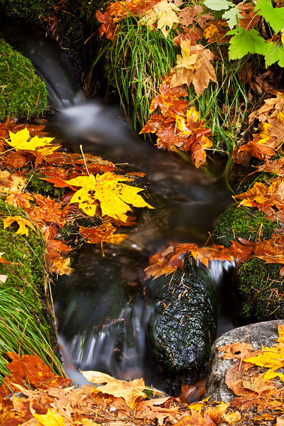 Below_Fern_Springs_Yosemite_National_Park_Fall_Colors_California