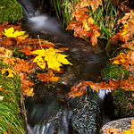 Below_Fern_Springs_Yosemite_National_Park_Fall_Colors_California